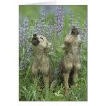 Perritos de lobo que gritan en prado tarjeta de felicitación