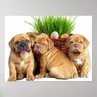 Perritos de Pascua Dogue de Bordeaux Póster