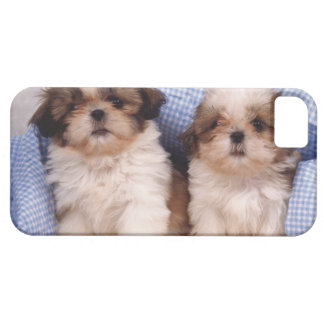 Perritos de Shih Tzu debajo de una manta comprobad iPhone 5 Protectores