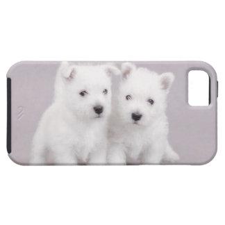 Perritos de Westie iPhone 5 Carcasa
