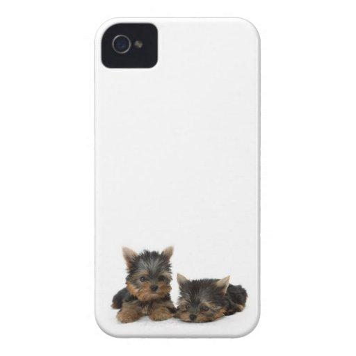 Perritos de Yorkshire Terrier iPhone 4 Case-Mate Protector