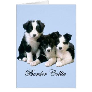Perritos del border collie tarjeta de felicitación