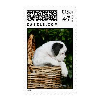 Perritos del boxeador en cesta sello postal