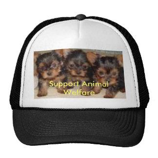 perritos del chihuahau, ayuda AnimalWelfare Gorro De Camionero