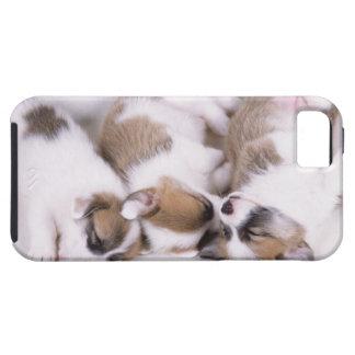 Perritos del corgi el dormir galés iPhone 5 funda