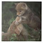Perritos del coyote que luchan (Canis Latrans) Azulejos Ceramicos