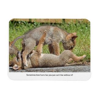 Perritos del coyote que muerden y que juegan iman rectangular