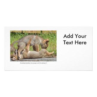 Perritos del coyote que muerden y que juegan tarjetas fotográficas personalizadas