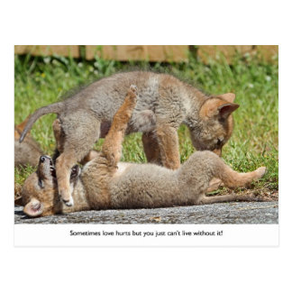 Perritos del coyote que muerden y que juegan postal
