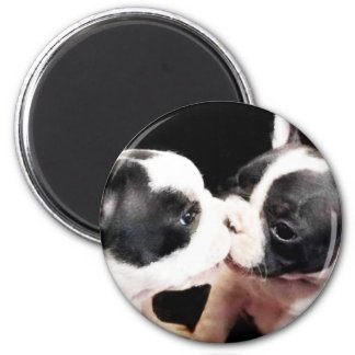 Perritos del dogo francés imán redondo 5 cm