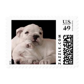 Perritos del dogo sellos postales