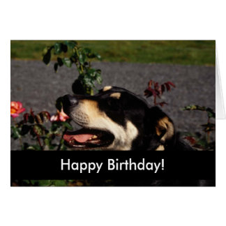 Perritos del feliz cumpleaños tarjeton