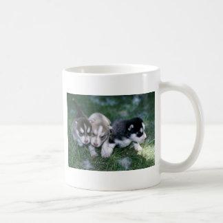 Perritos del husky siberiano, 3 semanas taza básica blanca