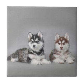 Perritos del husky siberiano azulejo cuadrado pequeño