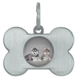 Perritos del husky siberiano placa de nombre de mascota