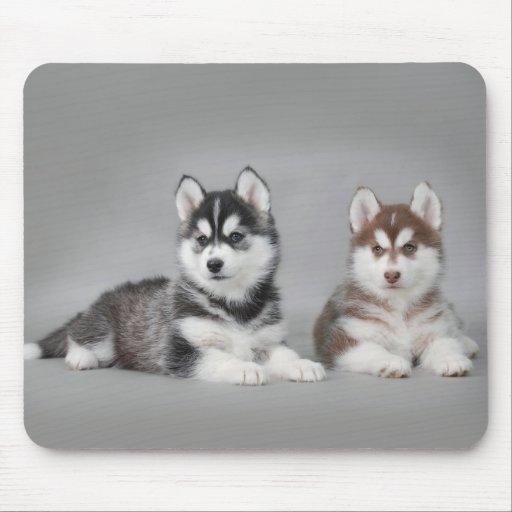 Perritos del husky siberiano alfombrillas de ratón