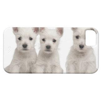 Perritos del oeste de Terrier de la montaña (7 sem iPhone 5 Protector