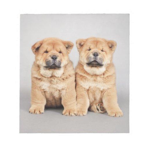 Perritos del perro chino de perro chino bloc