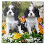 Perritos del perro de aguas de rey Charles Azulejo Cuadrado Grande