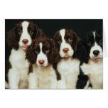 Perritos del perro de aguas de saltador inglés (2) tarjetas