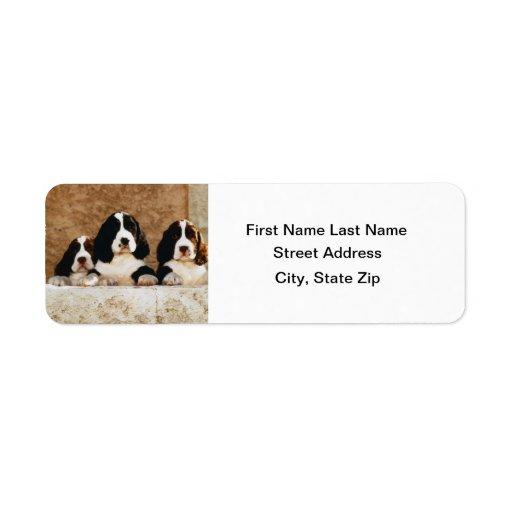 Perritos del perro de aguas de saltador inglés etiquetas de remite