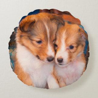Perritos del perro pastor de Shetland que se Cojín Redondo