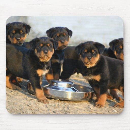 perritos del rottweiler tapete de ratones | Zazzle