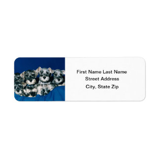 Perritos del Schnauzer miniatura Etiqueta De Remite