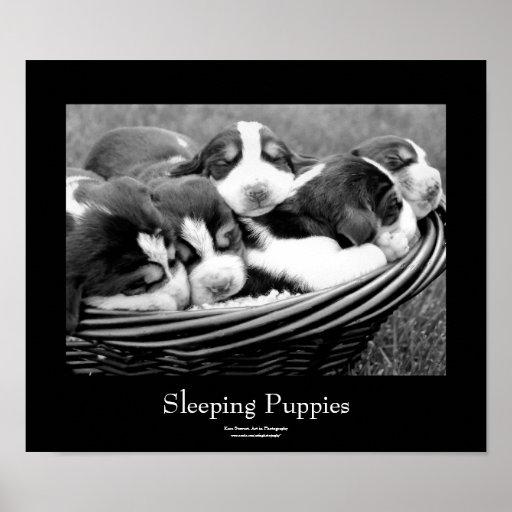 Perritos el dormir posters