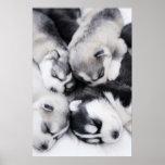 perritos fornidos lindos poster