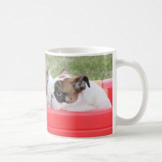 Perritos ingleses del dogo en un carro taza de café