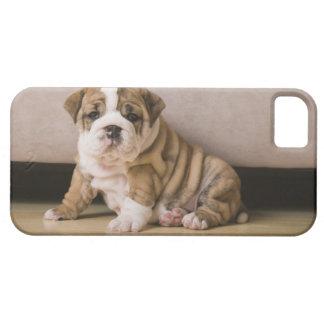 Perritos ingleses del dogo iPhone 5 cobertura