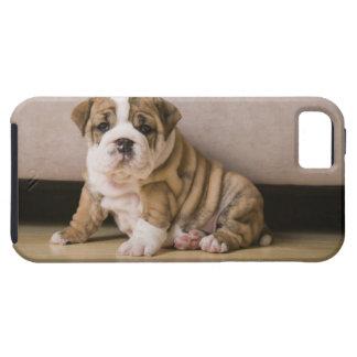 Perritos ingleses del dogo iPhone 5 carcasas