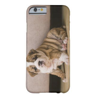 Perritos ingleses del dogo funda para iPhone 6 barely there