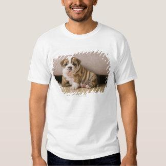 Perritos ingleses del dogo remeras