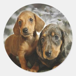 Perritos lindos del Dachshund (Brown/negro) Etiquetas Redondas