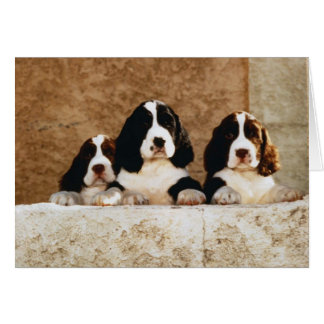 Perritos lindos perfectos de la imagen tarjeta de felicitación