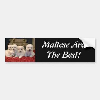 Perritos malteses para los amantes del perrito por pegatina para auto