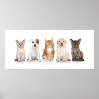 Perritos y gatitos - poster - srf póster