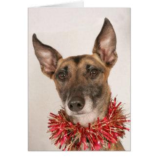 Perro 1 del navidad tarjeta de felicitación