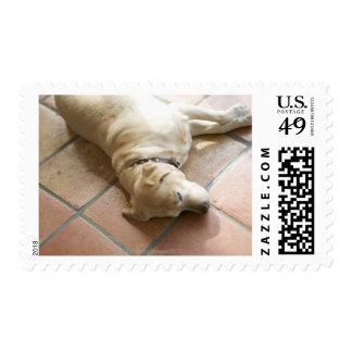 Perro 3 sellos