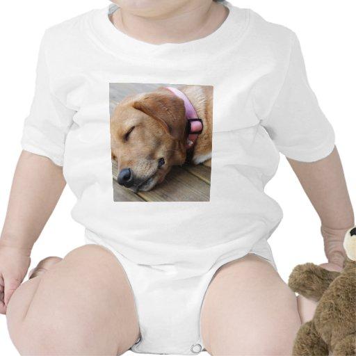 Perro #4 del golden retriever trajes de bebé
