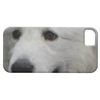 Perro adorable de los grandes Pirineos iPhone 5 Protector