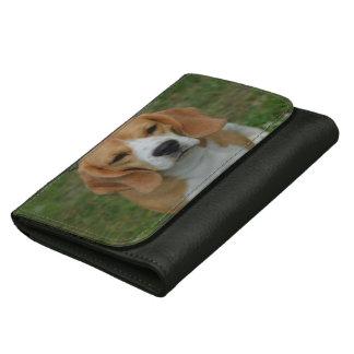 Perro adorable del beagle