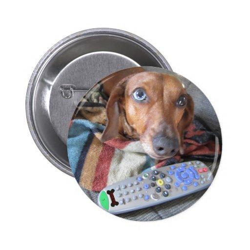 Perro adorable del Dachshund Pins