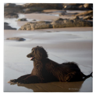 Perro afgano en la playa de Deba, Guipuzcoa, Azulejo Cuadrado Grande