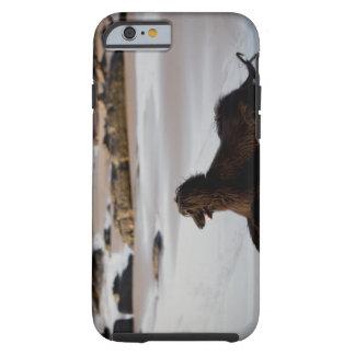 Perro afgano en la playa de Deba, Guipuzcoa, Funda Para iPhone 6 Tough