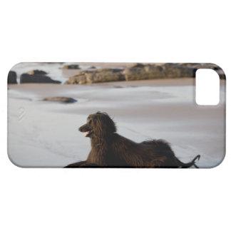 Perro afgano en la playa de Deba, Guipuzcoa, Funda Para iPhone 5 Barely There
