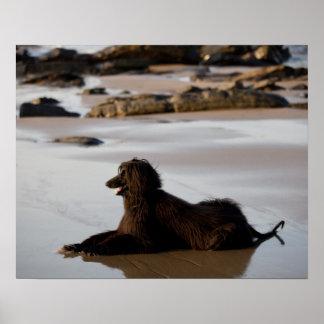 Perro afgano en la playa de Deba, Guipuzcoa, Póster