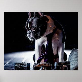 Perro aficionado del fotógrafo del dogo francés póster